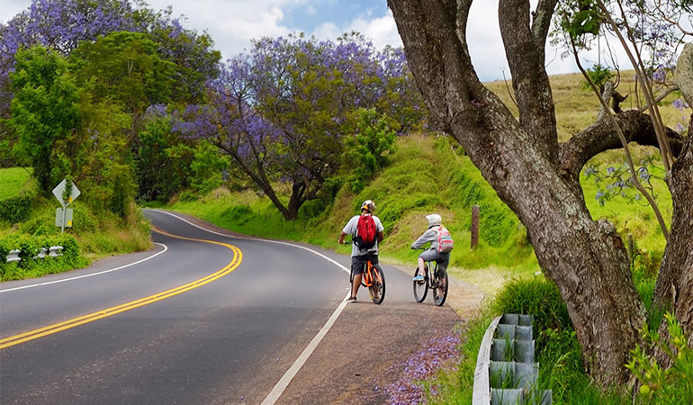 Two bicyclists ride on the shoulder of a road.